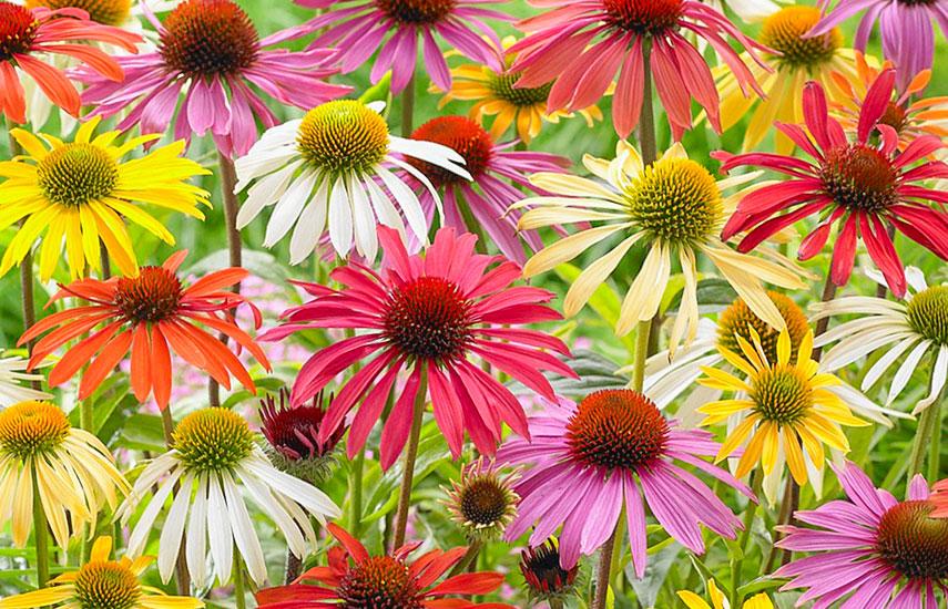 Цветы многолетники для «ленивого» сада, которые цветут круглый год №4