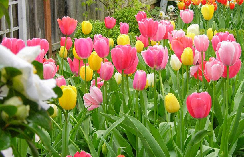 Цветы многолетники для «ленивого» сада, которые цветут круглый год №1