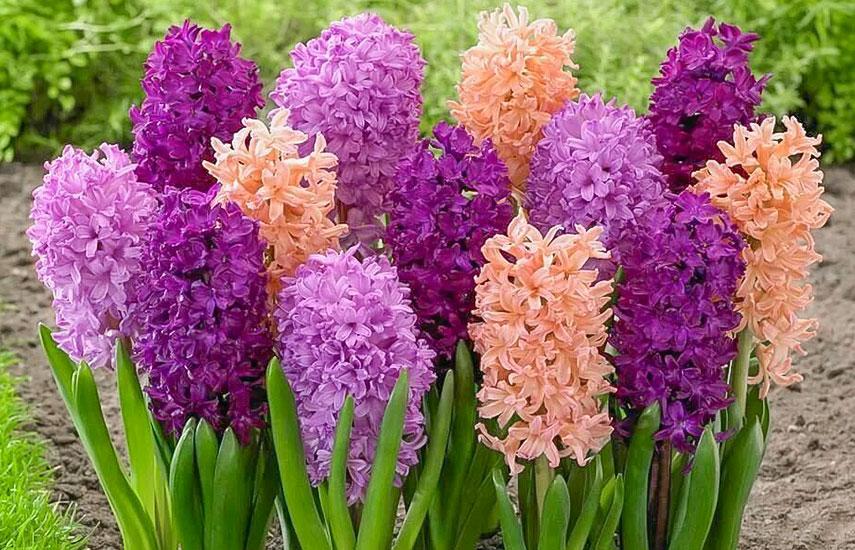 Цветы многолетники для «ленивого» сада, которые цветут круглый год №3