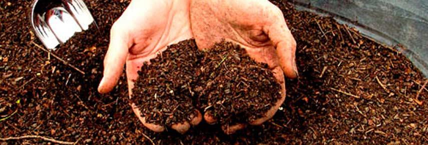 Как подготовить почву для укоренения саженцев роз