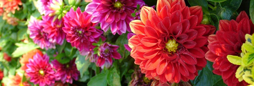 Пышное цветение