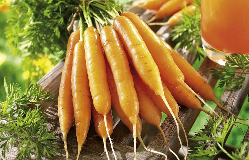 посев морковки