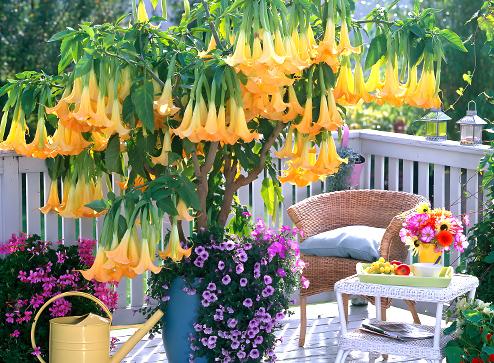 Каталог - -50% на декоративные растения - Беккер.Бу Беларусь