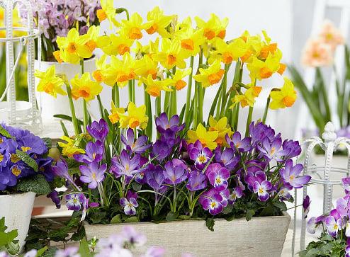 Каталог - -50% на прекрасные, нарядные тюльпаны - Беккер.Бу Беларусь