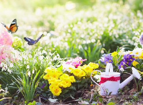 Каталог - -40% на товары для сада - Беккер.Бу Беларусь